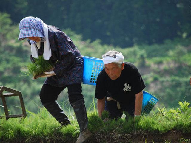 ラブフォーニッポンロードレポートお米作り
