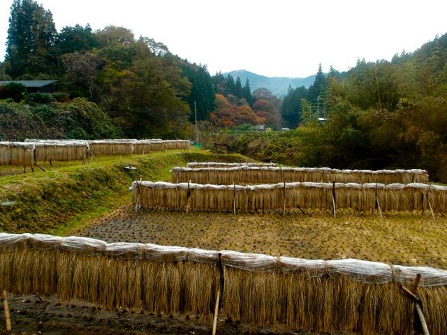 """日光山久保でのお米作り""""脱穀"""""""